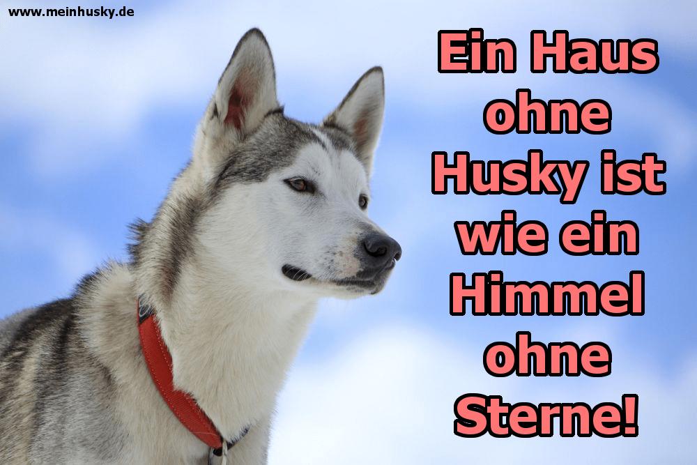 Ein Husky sieht den Himmel an