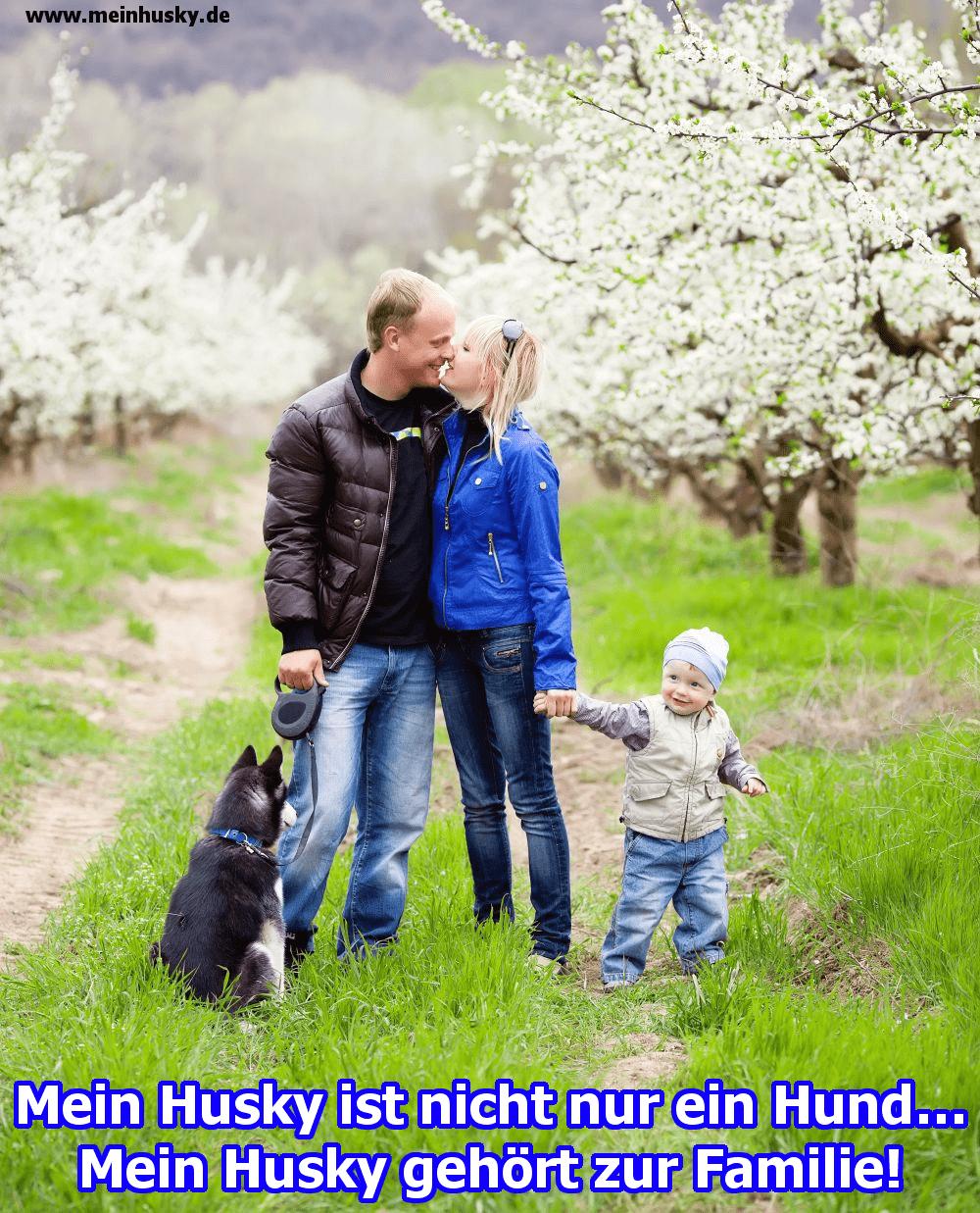 Eine Familie im Garten und ihr Husky