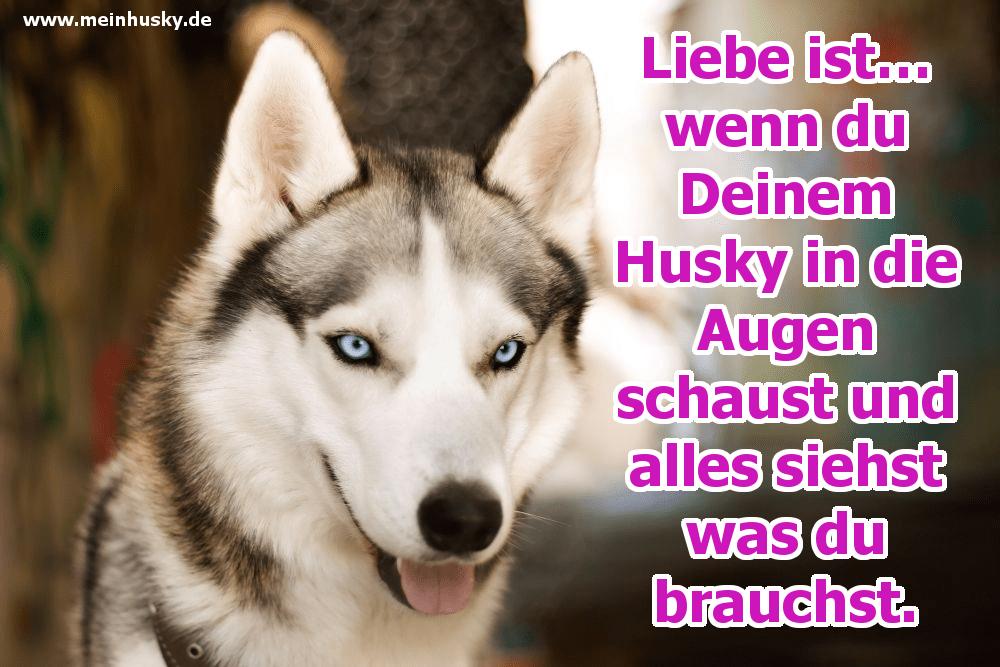 Ein glücklicher Husky