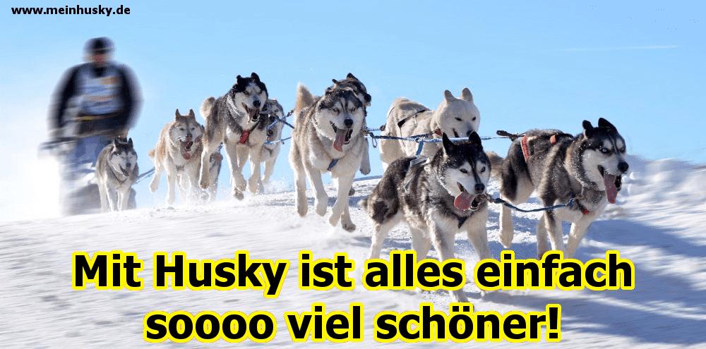 Einige Huskys laufen im Schnee